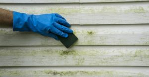 The Biggest Lie About Home Power Washing Services