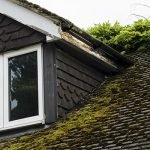 Common Mold Issues on Your Roof